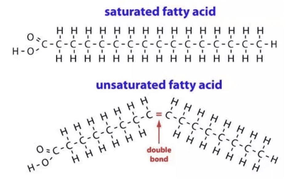 Saturated vs Unsaturated Fatty Acid